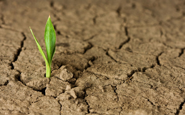 resilient-sprout-in-drought_645x400